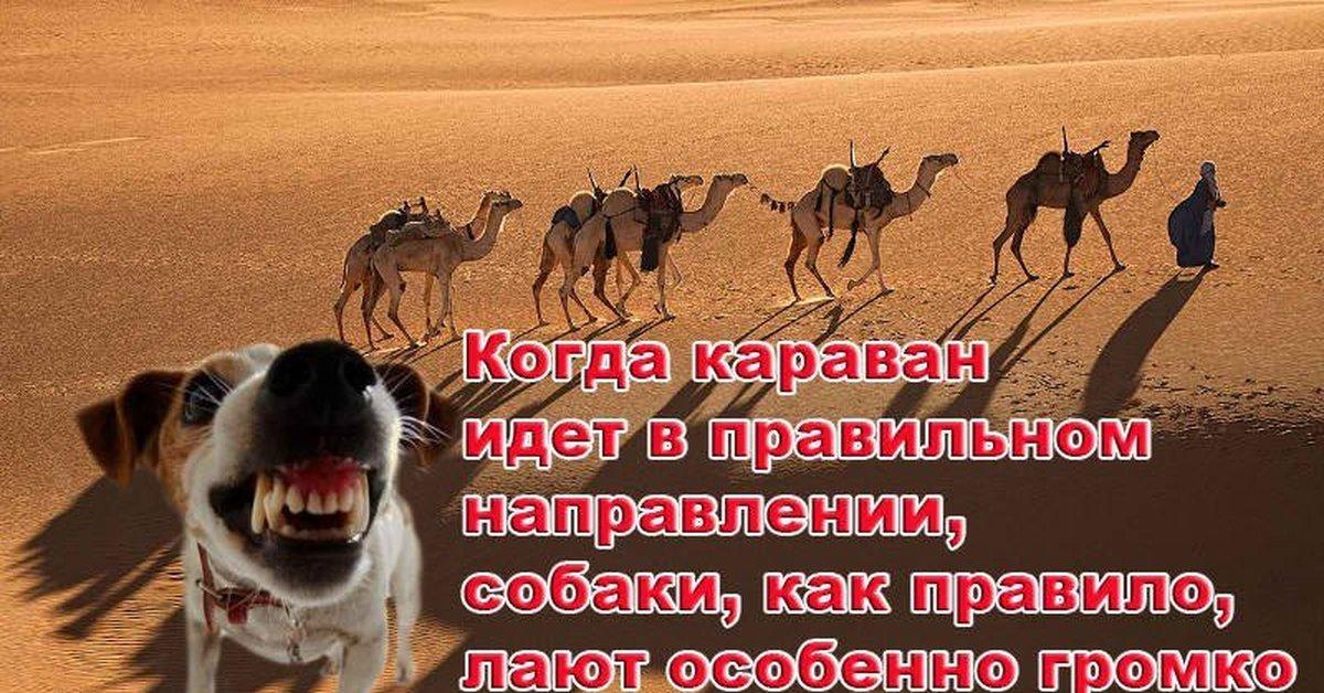 Дана соколова караван скачать и слушать песню онлайн бесплатно.